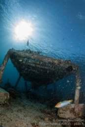 """Pouponnière"" à corail. Coral Eye, Bangka Island. Sulawesi, Indonésie. Mars 2013."