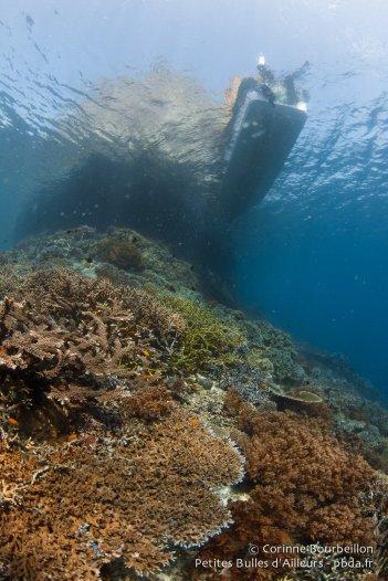 Sous l'eau à Raja Ampat. Papouasie occidentale, Indonésie, janvier 2015.