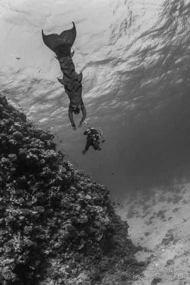 Cindy Guyot, sirène. (Mer Rouge, octobre 2016)