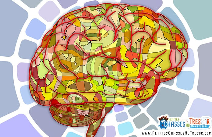 méthode pédagogique et neurosciences