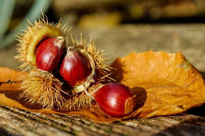 activité automne enfant châtaignes