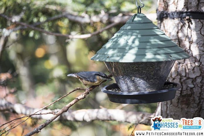 Oiseau entrain de manger sur une mangeoire