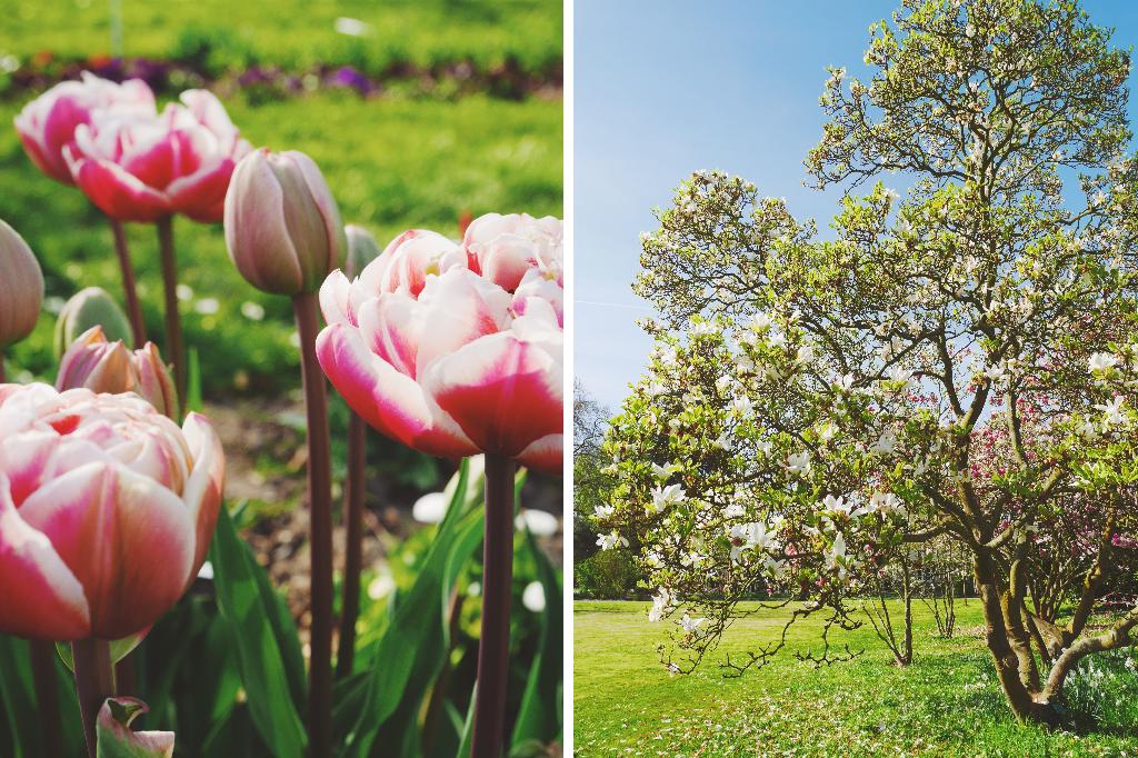 Jardin Breuil