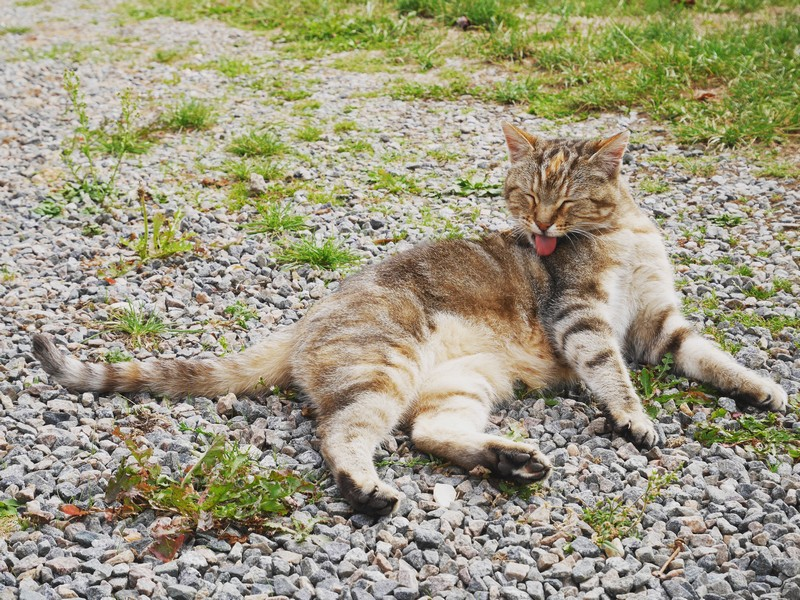 chat campagne