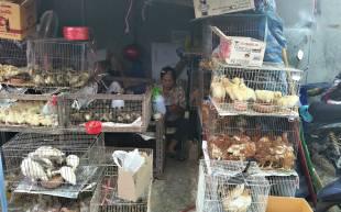 Un stand à Chatuchak