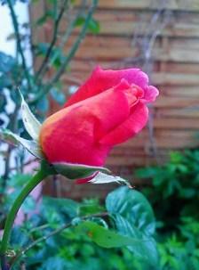 jardinfou5
