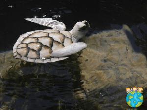 Sri Lanka avec les enfants : tortues de Bentota