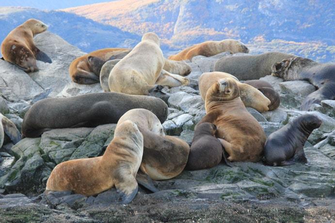Patagonie éléphants de mer