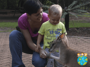 Wallaby Petits Globetrotteurs