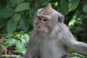 Lombok avec enfant : forêt singes