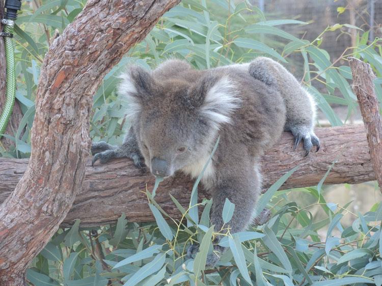 Parc national de Yancep - Australie enfants