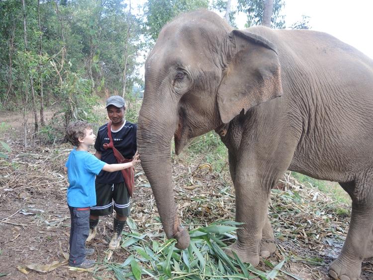 éléphants (1)