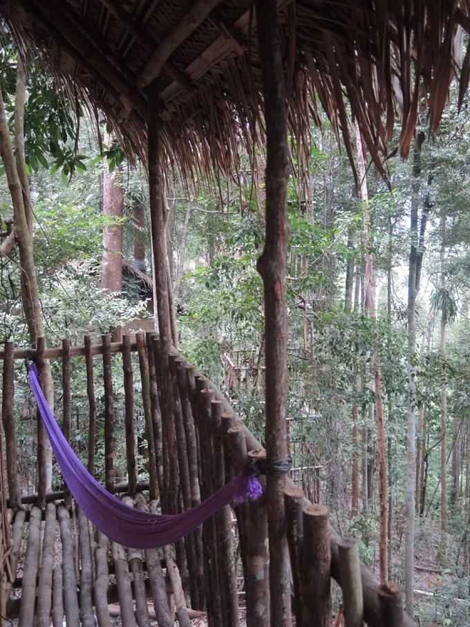 rainforest treehouse malaisie