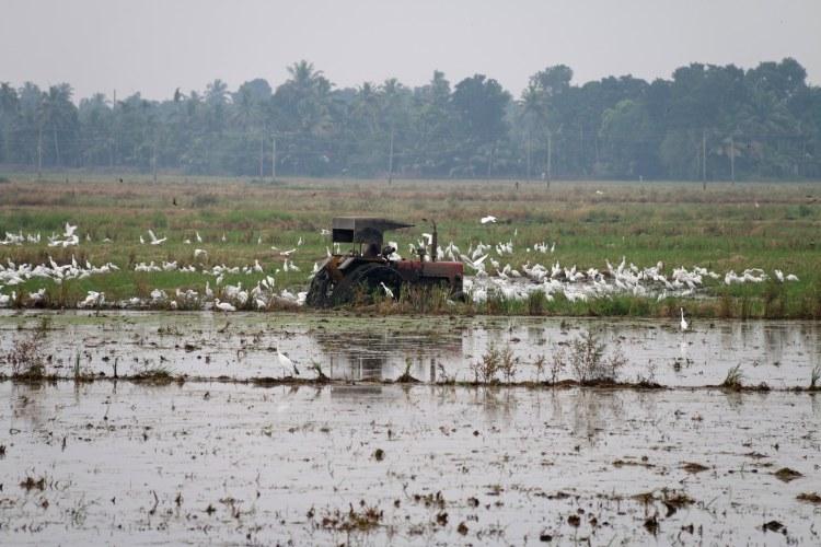 élevage de canards inde kerala