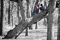Ados sur un arbre, photo de Ron Guest (CC BY-NC-ND 2.0)