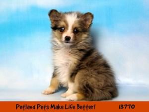 Hickory Craigslist Free Pets