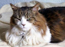 swollen_cat.jpg
