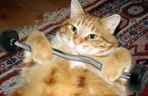 cat_exercise.jpg