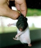 hamster_1.jpg