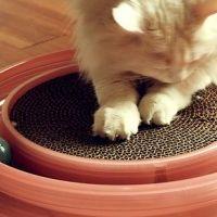 Kediler Neden Tırnaklarını Eşyalara Geçirirler?