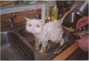 catbath.jpg