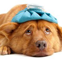 Köpekler için ilk yardım