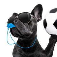 Köpeğin ıslık, düdük veya benzer bir sesle çağrılması