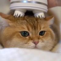 Kedinize nasıl masaj yapmalısınız?