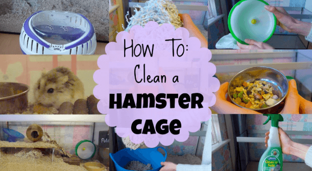 what are hamster cages