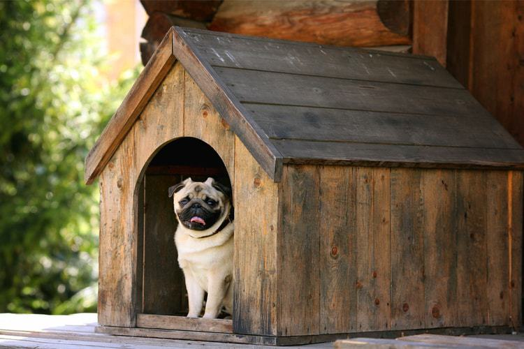 the best outdoor dog houses of 2021