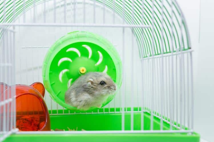 the 50 best hamster
