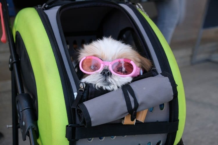the best rated dog strollers of 2021