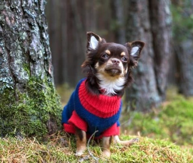 The Best Small Dog Sweaters