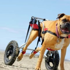 Wheelchair Dog Card Table And Chairs Cosco The 25 Best Wheelchairs Of 2019 Pet Life Today Reviews