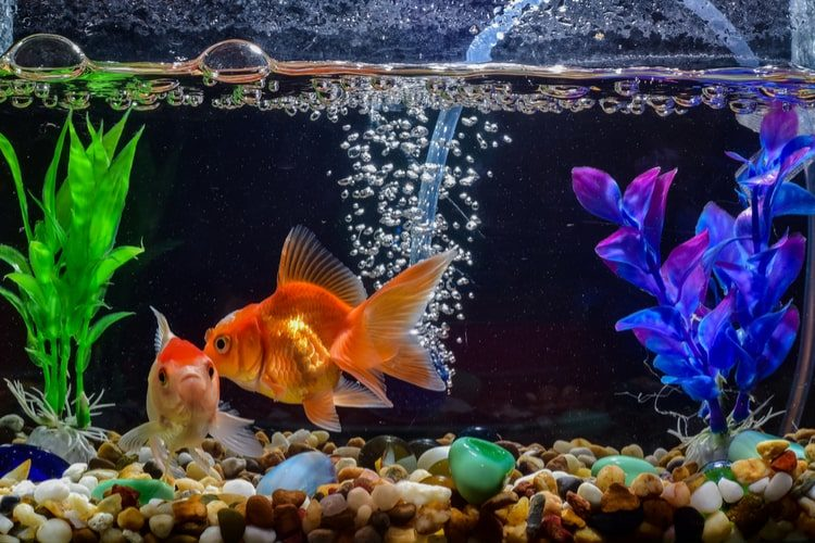 25 best aquarium fish