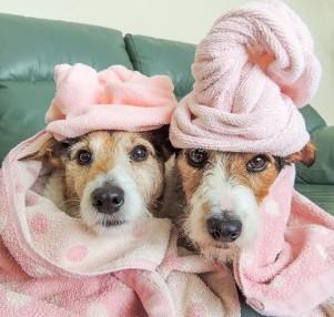 Dog Bath. Photo Credit: Kerrie Greenfield