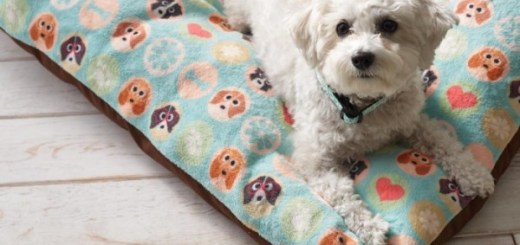 Pattern Pet Beds for Dogs and Cats