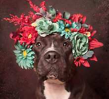 Pit Bull Flower Power Products
