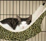 pecute-hanging-hammock-bedpecute-hanging-hammock-bed