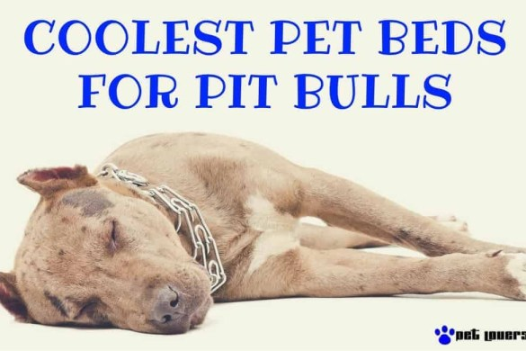 pit-bull-beds