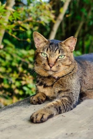 Outdoor Cat House Buyers Guide