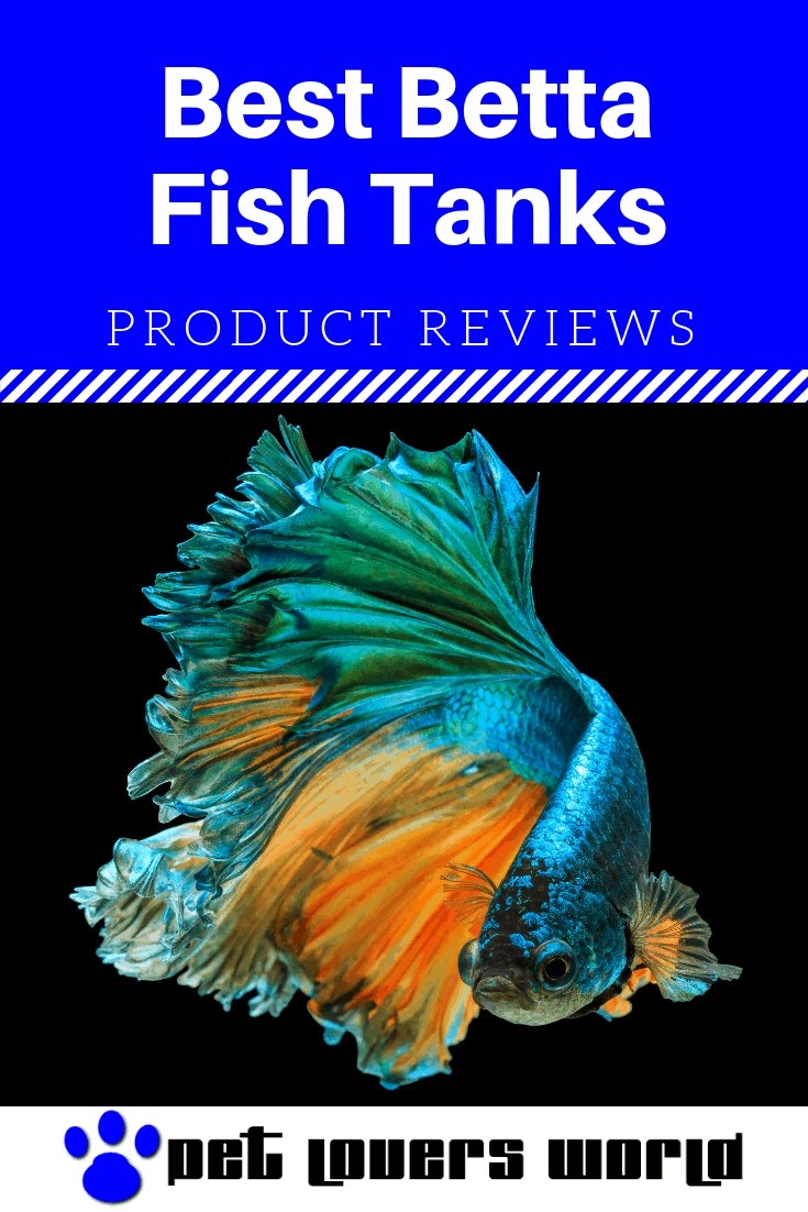 Best Betta Office Fish Tanks Reviews Pinterest Image