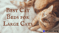 These Are the Best Cat Beds for Large Cats - Pet Lovers World