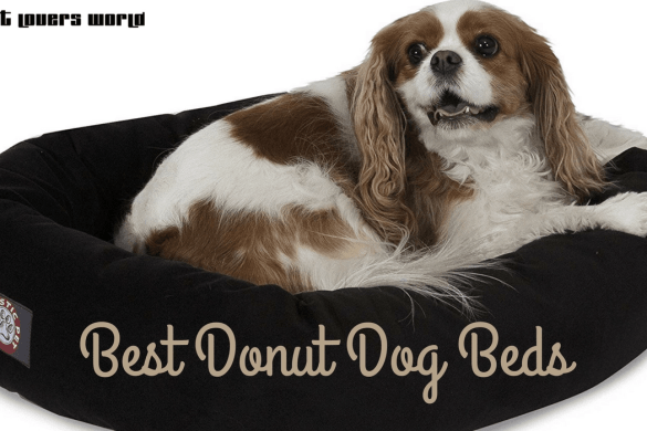 Best Donut Dog Beds