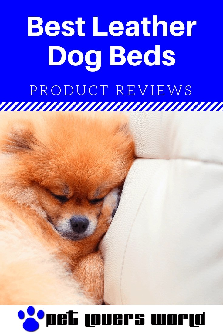 Best Leather Dog Beds Reviews Pinterest Image