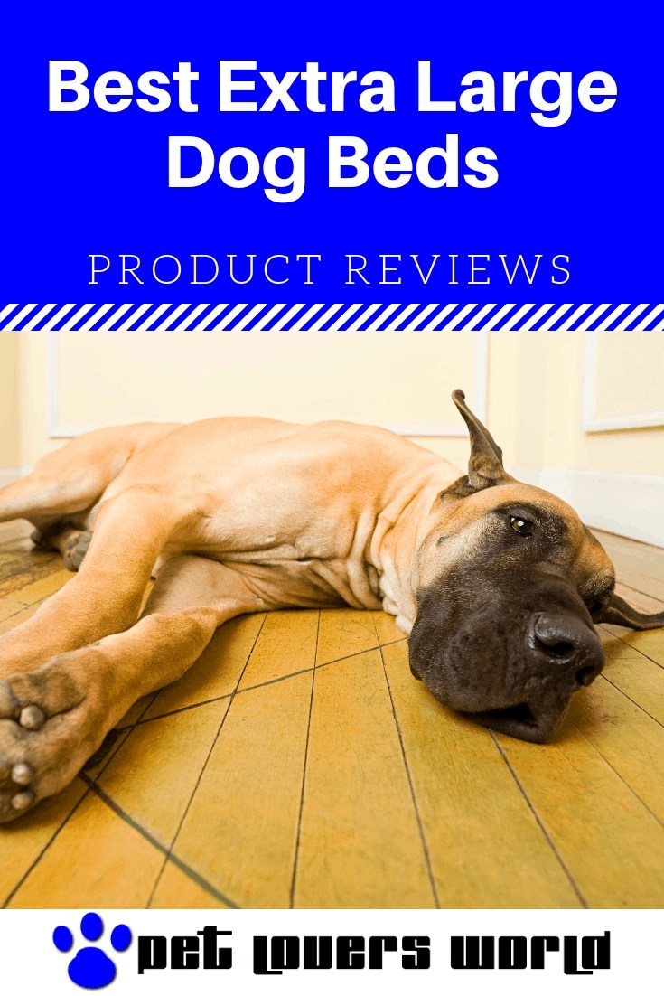 Best X Large Dog Bed Reviews