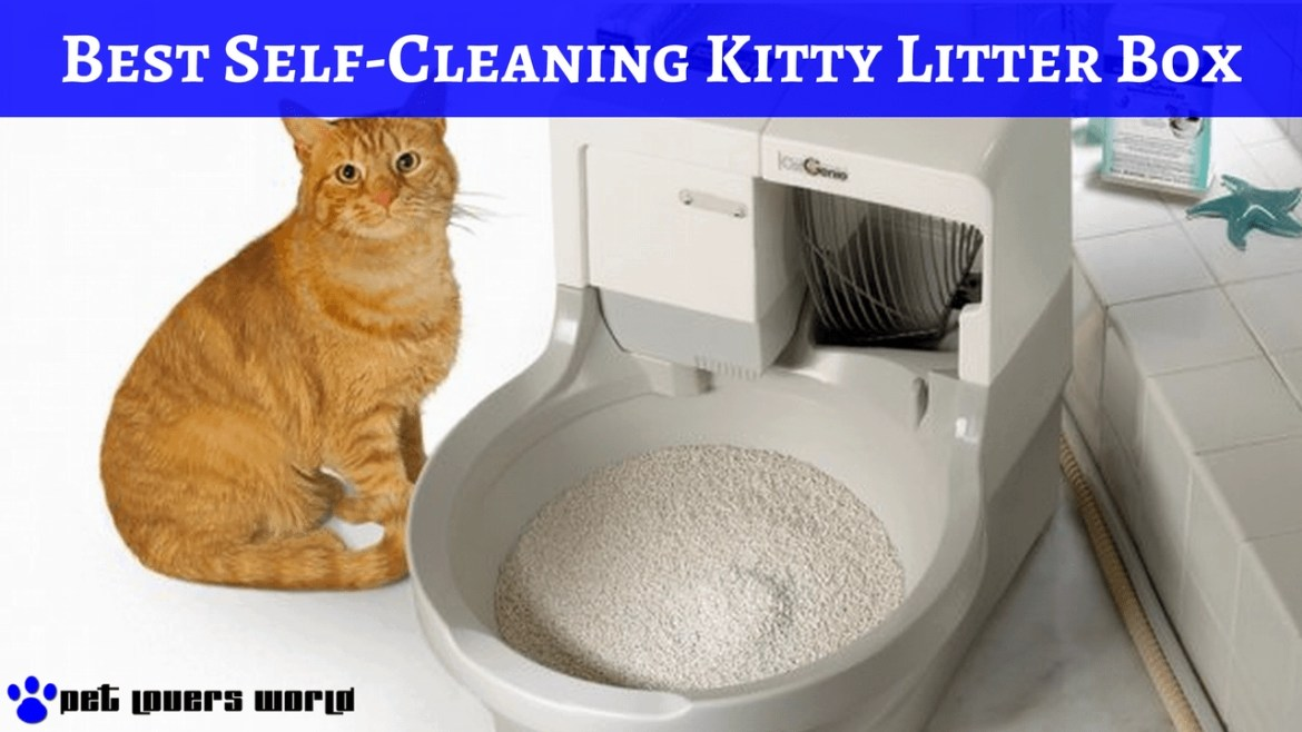 Best Automatic Self Cleaning Cat Litter Box Reviews