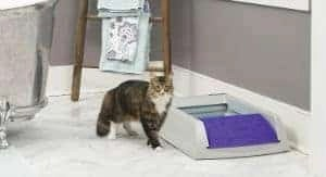 Automatic Litter Box