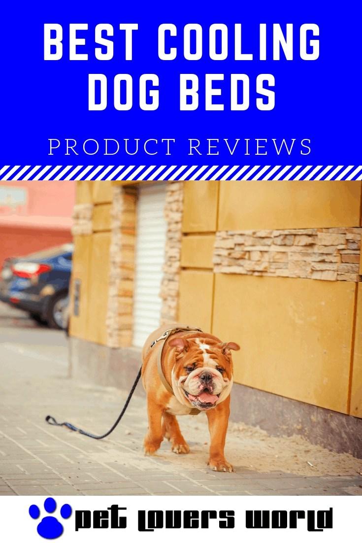 Best Dog Gps Tracker Reviews Pinterest Image