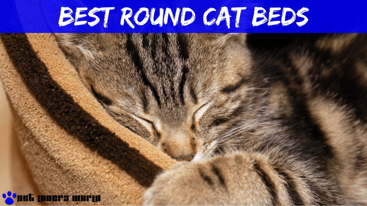 Best Round Cat Bed Reviews